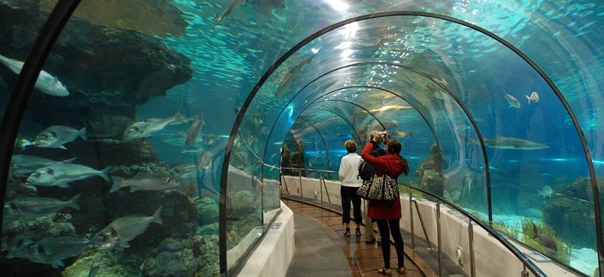Acquario di barcellona barcellona for Acquario shop online